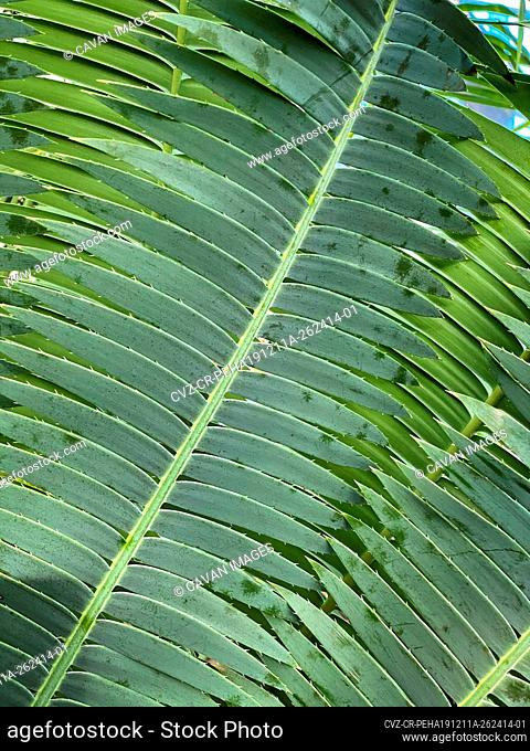 Green tropical plants in jungle garden close up of leaves