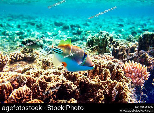 Living Coral reef in Red Sea, Egypt. Natural unusual background