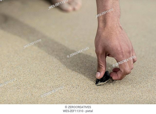 Person picking up a seashell on a beach