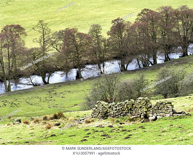 Trees by the River Nidd in early sping near Pateley Bridge Nidderdale North Yorkshire England