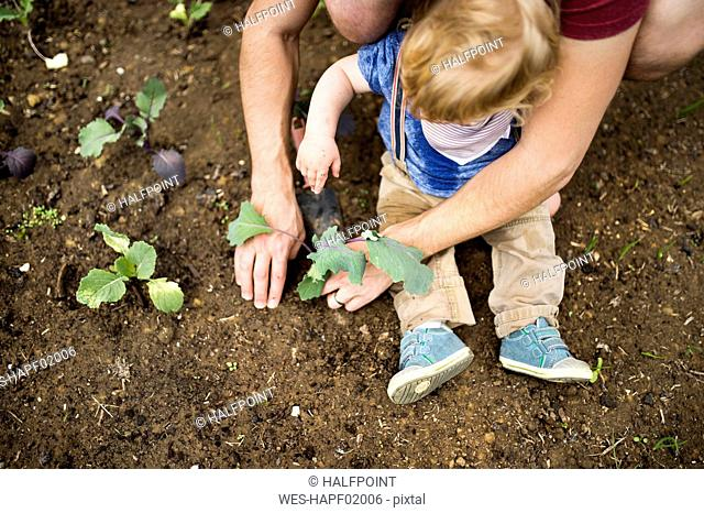 Father with his little son in the garden planting seedlings