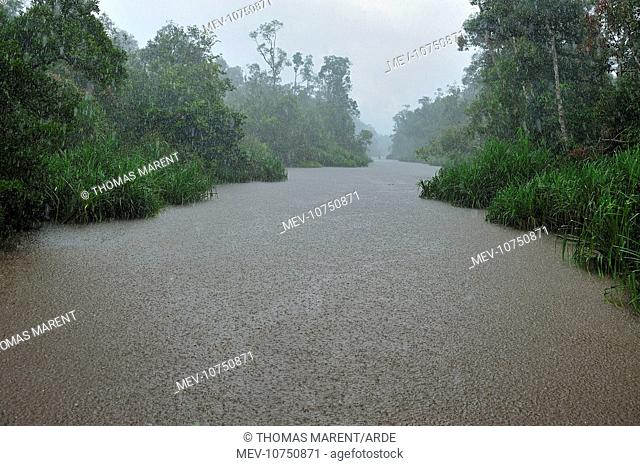 heavy rain - Sekonyer river with forest