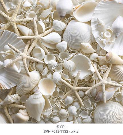 Selection of sea shells and star fish