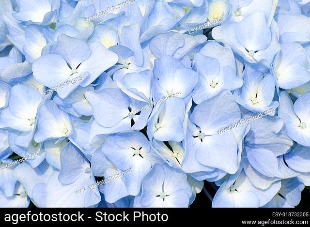 colorful fresh flower background