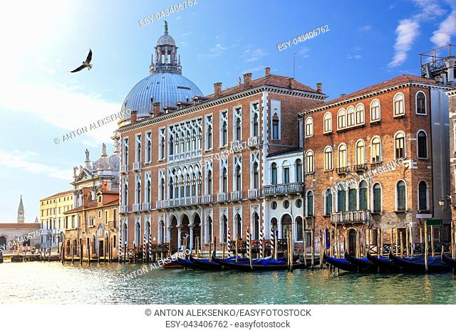 Grand Canal of Venice in Italy, view on Santa Maria della Salute basilica and gondolas