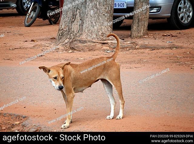 23 October 2019, Cambodia, Siem Reap: A stray dog on a road. Photo: Soeren Stache/dpa-Zentralbild/ZB. - Siem Reap/Angkor/Cambodia