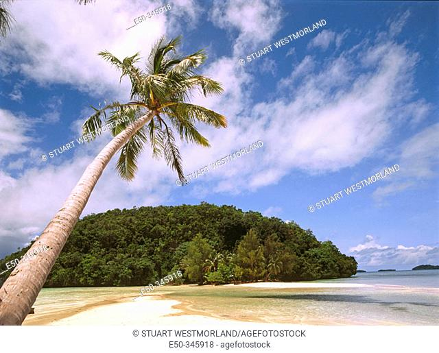 Overhanging palm tree at beach. Rock Islands. Palau. South Pacific