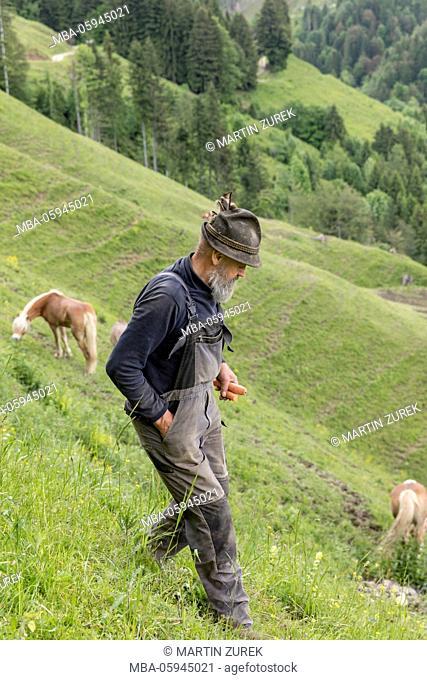 Man on the alp, Austria, border area to Germany, Tyrol