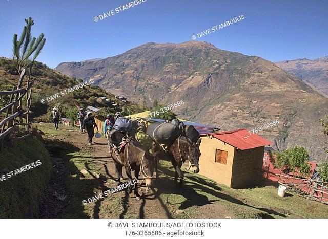 """Mules on the Choquequirao trek, the """"""""other Machu Picchu, """""""" Marampata, Apurimac, Peru"""