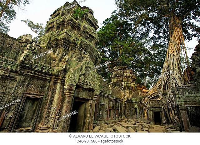 Ta Prohm temple. Angkor. Cambodia