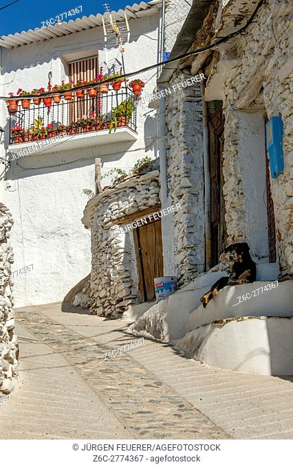 lazy dog in a lane of village Trevélez, Andalusia, Spain