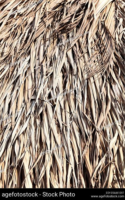 Close up of thatched roof for texture or background