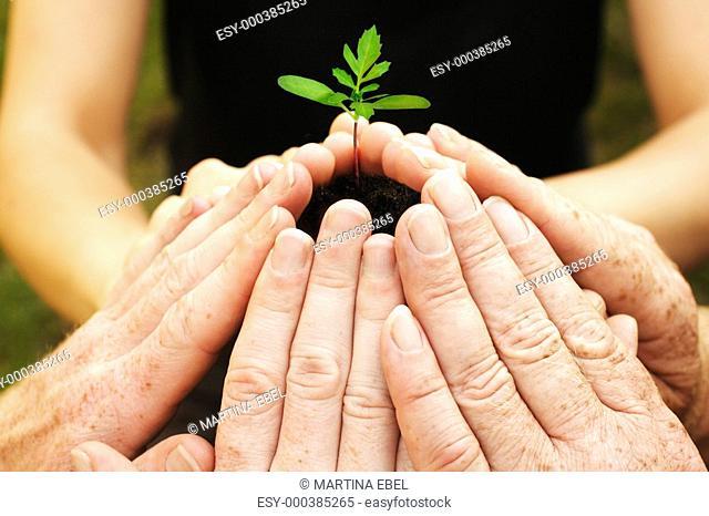 Sechs Hände schützen einen Sämling