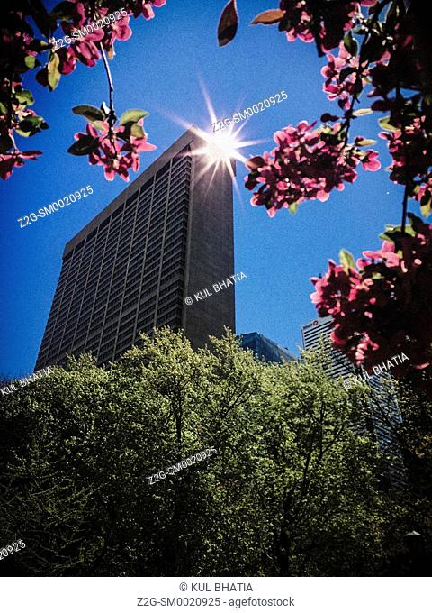 Early morning sun bounces off a highrise building, as seen through an arch of apple blossoms, Toronto, Ontario, Canada