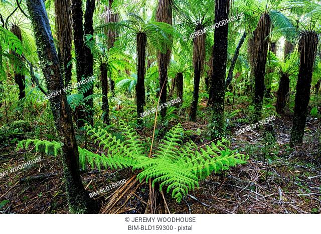 Fern growing in forest undergrowth