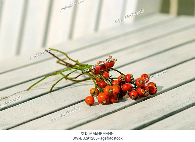 rose hips on white table