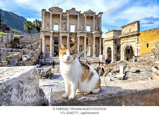 Cat in front of the Library of Celsus in Ephesus, Selçuk, Izmir Province, Turkey