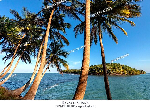 PALM TREES ON ILE ROYALE WITH A VIEW OF ILE SAINT-JOSEPH ON WHICH THERE WAS ONCE A PENAL COLONY, SALVATION'S ISLANDS, KOUROU, FRENCH GUIANA, OVERSEAS DEPARTMENT
