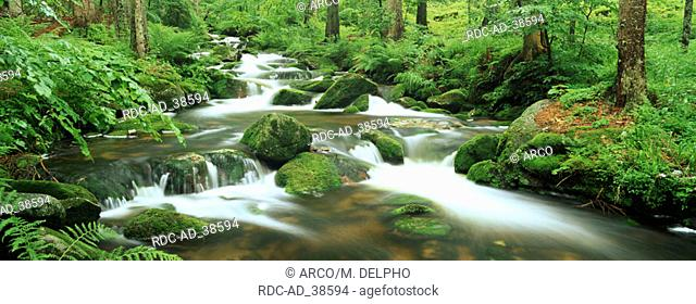 Forest Brook national park Bavarian Forest Germany