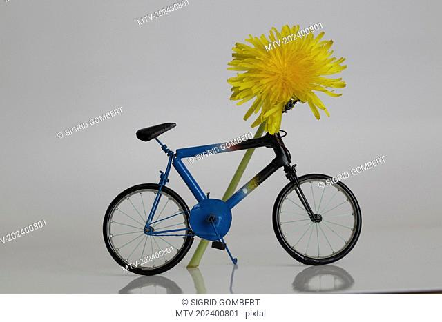 Close-up of bicycle with flower