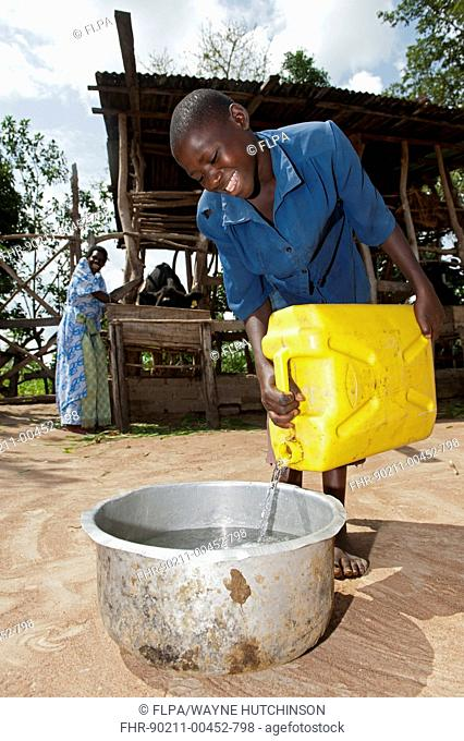 Girl pouring fresh water for housed dairy cow to drink, Uganda, June