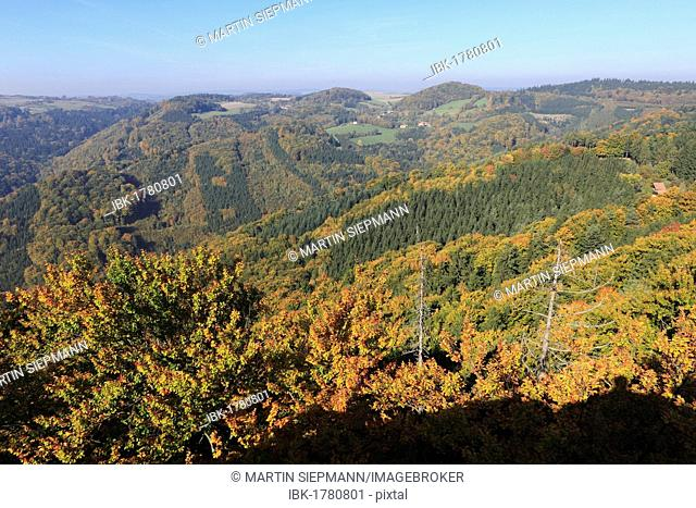 Forest in autumn, view from Gruberwarte look-out on the Buschandlwand mountain, Wachau valley, Waldviertel region, Lower Austria, Austria, Europe