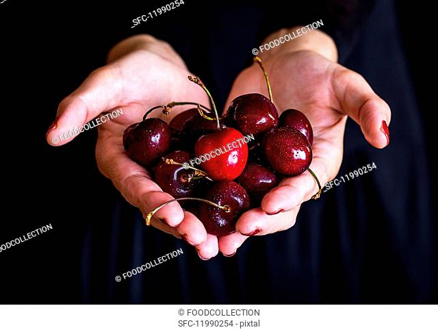 Cherries in a woman's hand against a black background