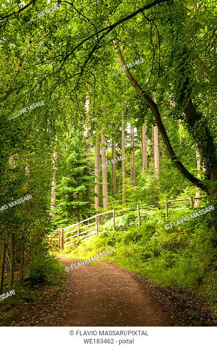 Dunster Forest is one of the oldest forest in Exmoor