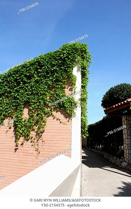 path way with ivy growing on wall in rome italy