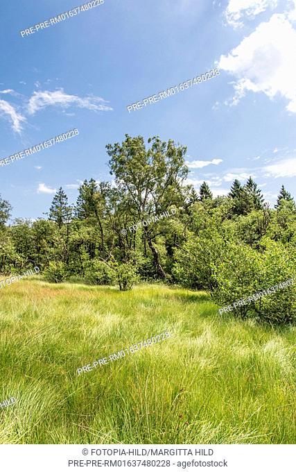 Hühnerfeld nature reserve, Kaufunger Wald, Göttingen district, Lower Saxony, Germany / Naturschutzgebiet Hühnerfeld, Kaufunger Wald, Landkreis Göttingen