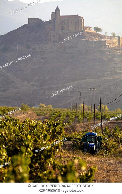 Vineyards around the town of San Vicente de la Sonsierra, on the border of La Rioja and the Basque Country. Spain, Europe