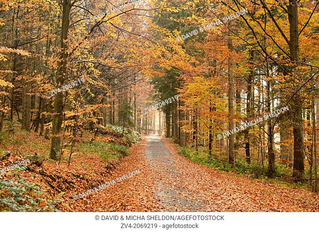 Landscape of a trail going through the forest in autumn in the bavarian forest