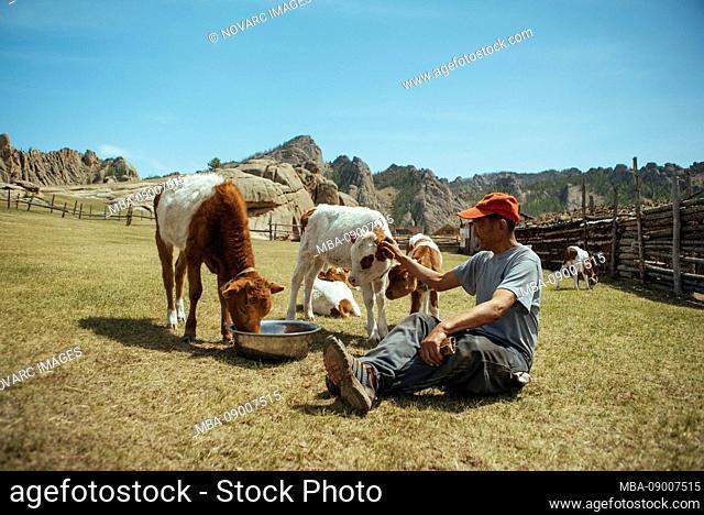 Herdsman stroking calves on a paddock, Mongolian Switzerland, Gobi Desert, Mongolia