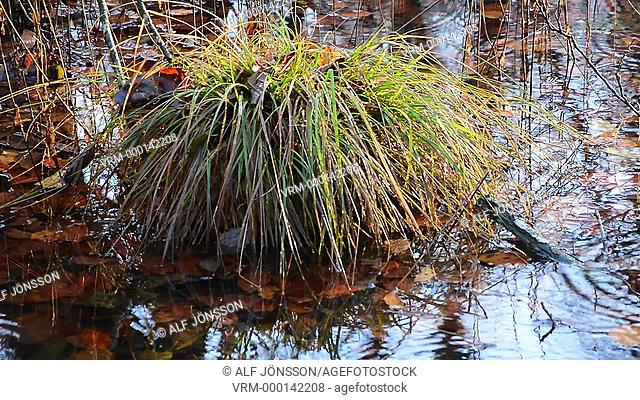 Mirroring in pond