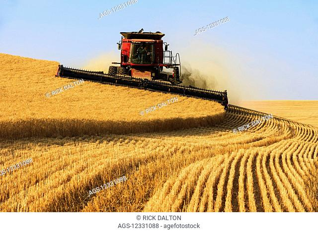 A Combine Harvests Grain In The Palouse Region Of Easter Washington; Washington, United States Of America