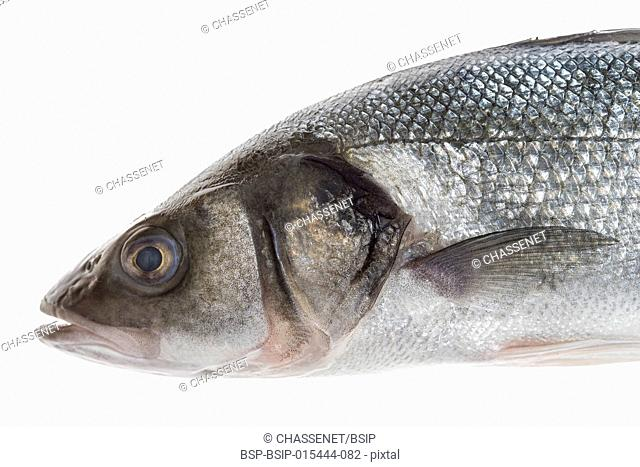 Close UP Fresh sea bass cut with head isolated on white background