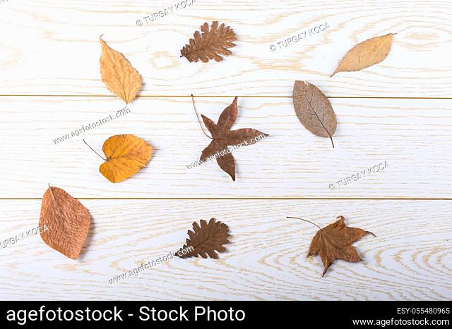Dry Autumn leaves placed on a wooden panel texture