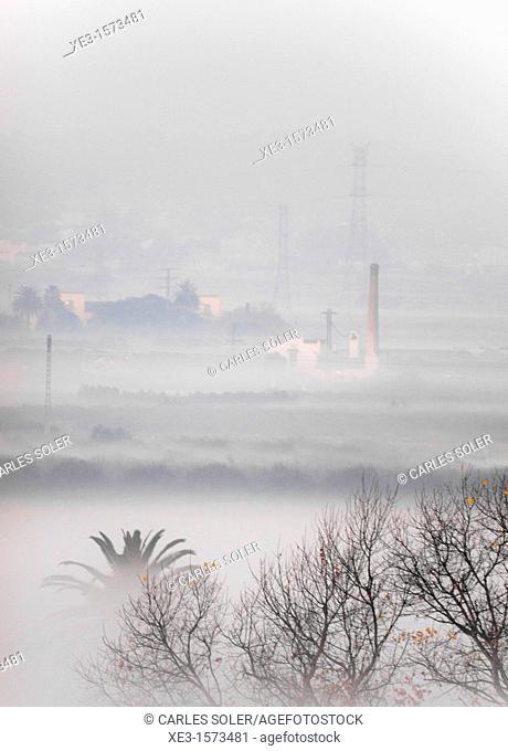 Foggy fields, Catarroja, Valencia