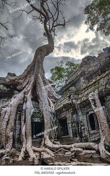 Temple overgrown with tree roots, Siem Reap, Cambodia