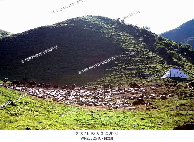 Kuhse County Qinghai Province