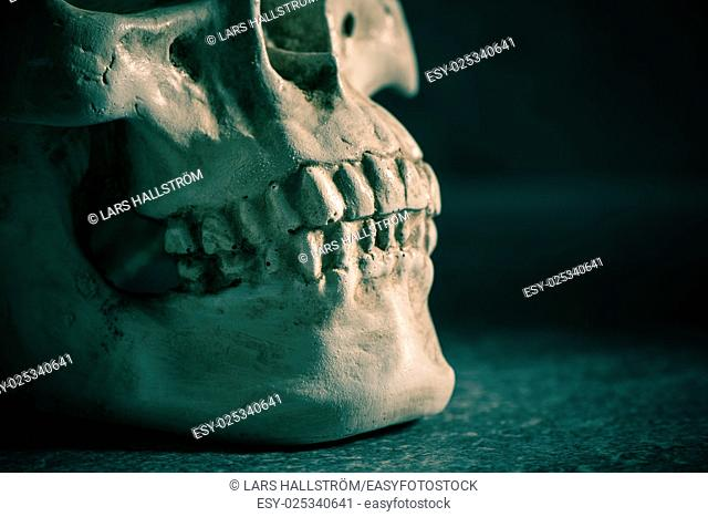 Human skull with dark background. Close up of teethConcept of death, horror and anatomy. Spooky halloween symbol