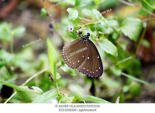 Butterfly, Paulau Perhentian Kecil Island, Terengganu, Malaysia