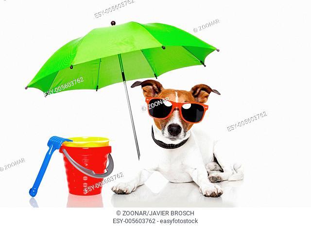 dog sunbathing with umbrella