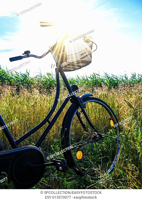 cornfield and a bicycle with bouquet and blue sky in summer