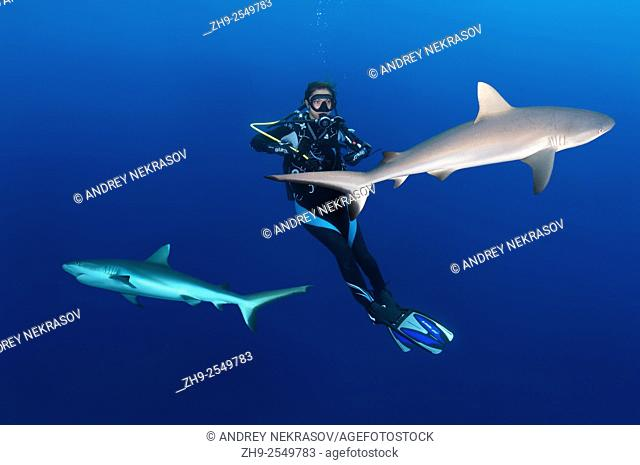 Young woman diver hangs in the water next to the two grey reef sharks (Carcharhinus amblyrhynchos), Indian Ocean, Maldives