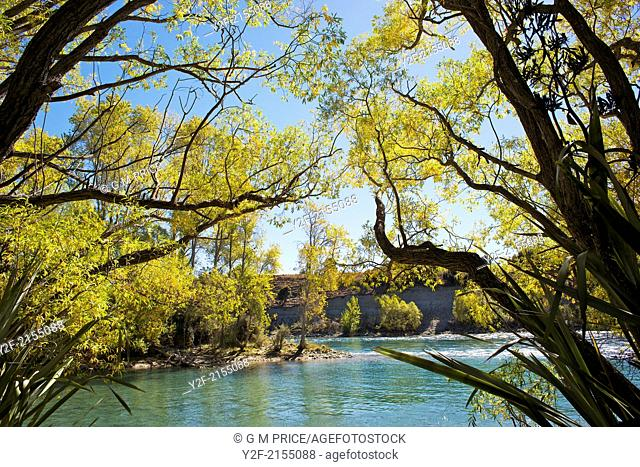 Autumn leaves over the Clutha River, Otago, New Zealand