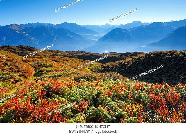 Grison Alps with blueberry bushes in autumn, Switzerland, Grisons, Heinzenberg