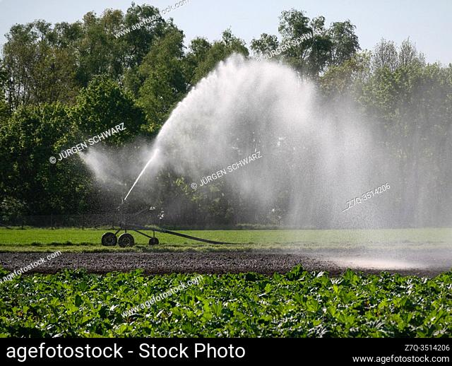 The fields are irrigated because of the dryness, Bornheim, NRW, Germany