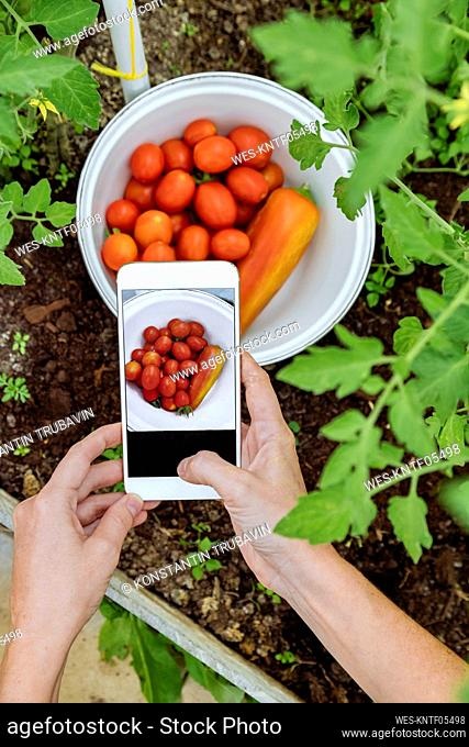 Woman taking picture of fresh fresh vegetable bowl at greenhouse