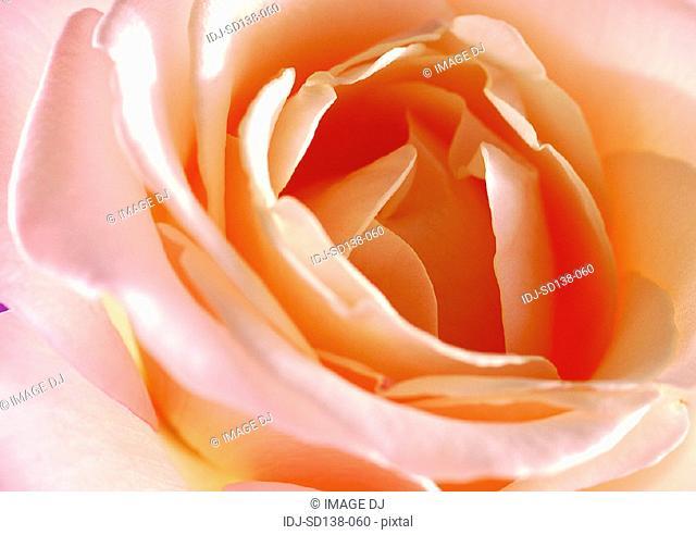 Close-ups of Flowers